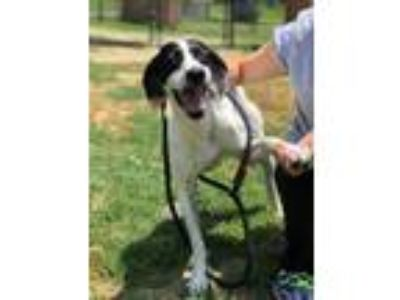 Adopt Bridget a Pointer