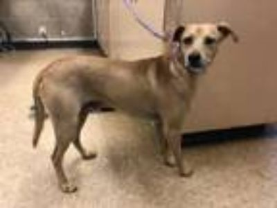 Adopt Buddy a Terrier, Mixed Breed