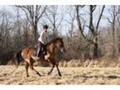 Talented and Quiet OTTB for SaleLease