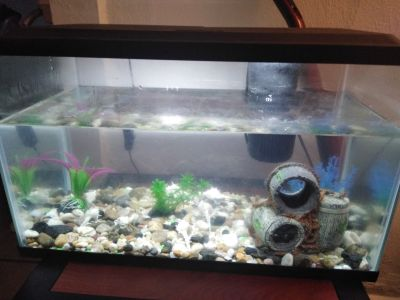 10 gallon fish aquarium