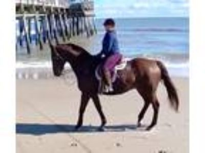 Thoroughbred gelding with big personality