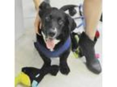 Adopt Jordan a Black Mixed Breed (Medium) / Mixed dog in New York, NY (25616411)