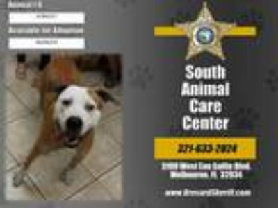 Adopt JAMESON a Tan/Yellow/Fawn - with White Mixed Breed (Medium) / Mixed dog in