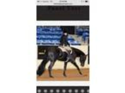 2004 AQHA mare with breeding