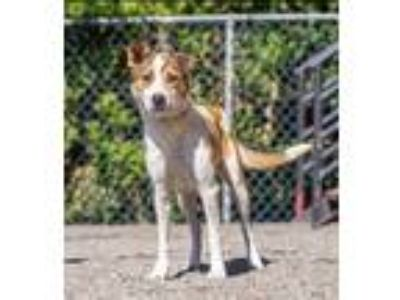 Adopt Egg a Cattle Dog