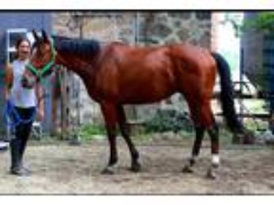 Day Lucky Madison One of our favored lesson horses