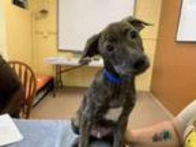Adopt Reef a Mixed Breed