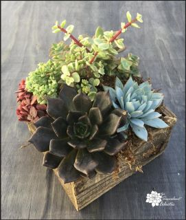 Mixed Succulents in Reclaimed Wood Square Planter!