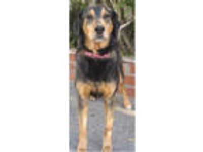 Adopt Ginger(& Zoe)-Sponsorship a German Shepherd Dog, Black Labrador Retriever