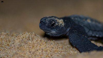 Wildlife Tour in Odisha- Witness a Diverse Wildlife Hidden Amidst Nature
