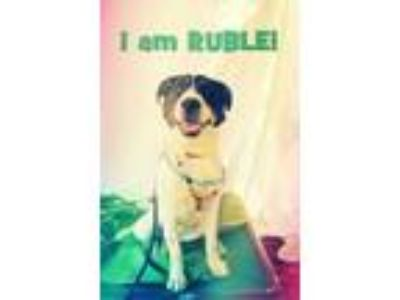 Adopt Ruble a White Retriever (Unknown Type) / Mixed dog in Chattanooga