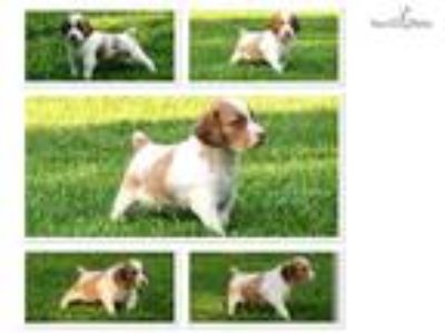 Grant - Champion Sired - Veterinarian Owned Kennel