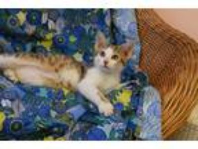 Adopt Stefan a Domestic Shorthair / Mixed cat in Westmont, IL (25566164)