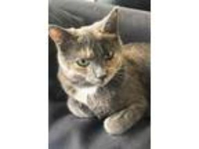 Adopt Emmi a Domestic Short Hair
