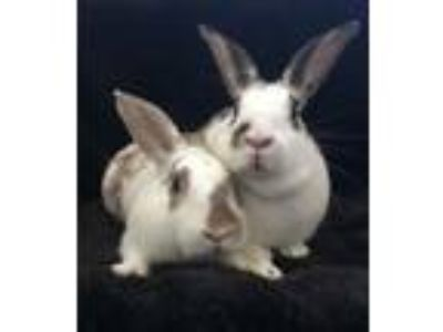 Adopt Juniper and Linden a Bunny Rabbit