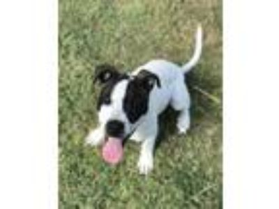 Adopt Johnny Cash a Terrier, Pointer