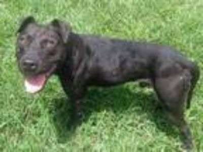 Craigslist Animals And Pets For Adoption Classifieds In Alachua