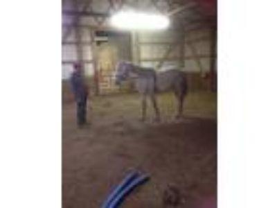 Adopt Etoile a Arabian