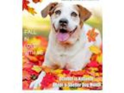 Adopt Franny a Border Terrier