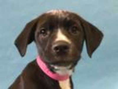 Adopt Bonnie a Black Retriever (Unknown Type) / Mixed dog in Coon Rapids