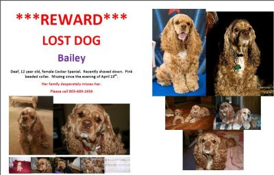 ***REWARD*** Missing Cocker Spaniel