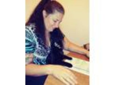Adopt Midnight a All Black Domestic Mediumhair cat in Gaston, SC (24916253)