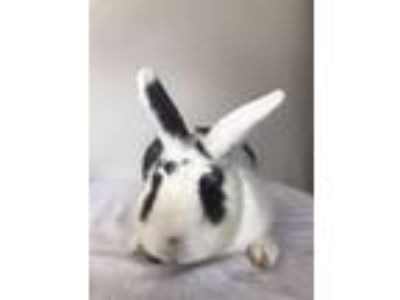 Adopt George a Bunny Rabbit