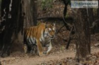 jungle safari in pench