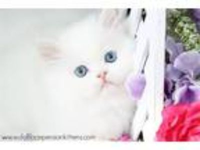 Most beautiful cats in the world!