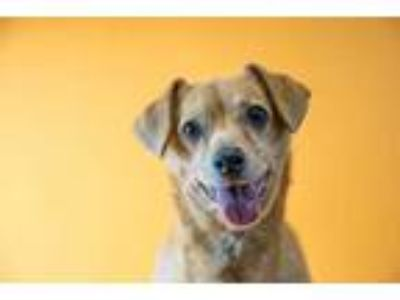 Adopt JACOB a Tan/Yellow/Fawn Dachshund / Mixed dog in Palm Springs