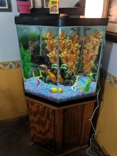 Craigslist - Pet Fish for Sale Classifieds in Erie, Pennsylvania