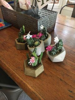 Small collection of cactus arrangements