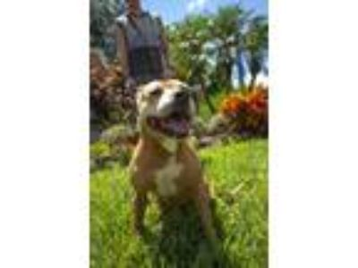 Adopt Lizzie a Black Mouth Cur