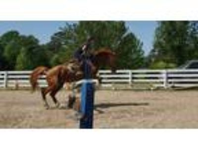 WB mare for on property lease