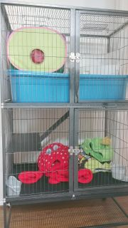 Craigslist Small Animals For Sale Classifieds In Waco Texas