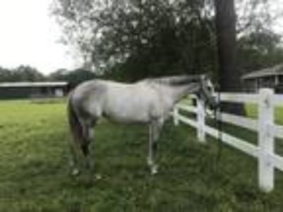 2014 Thoroughbred Mare Maybrys Honor