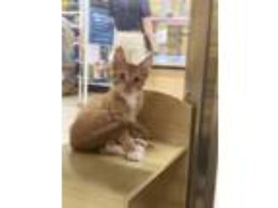 Kittens For Sale Classifieds In Humble Texas Claz Org