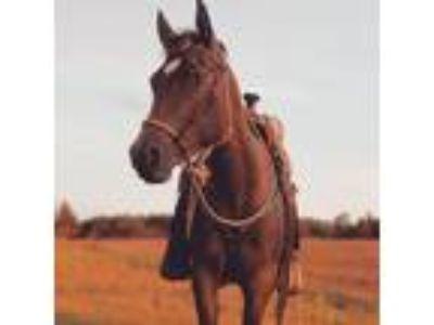 Adopt Starfire a Pony