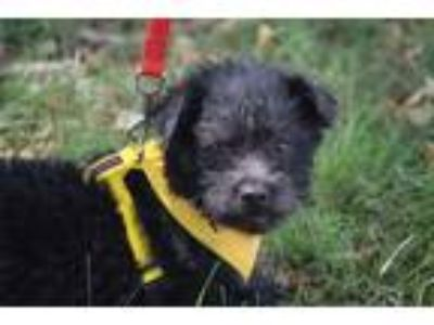 Adopt Tyler a Black Terrier (Unknown Type, Small) / Mixed dog in Rosamond