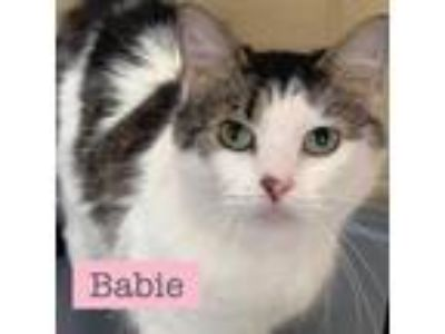 Adopt Babie a White (Mostly) Domestic Mediumhair (medium coat) cat in Ft.
