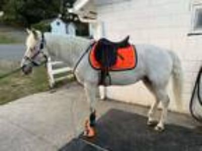 Large pony Partial lease 1 x wk