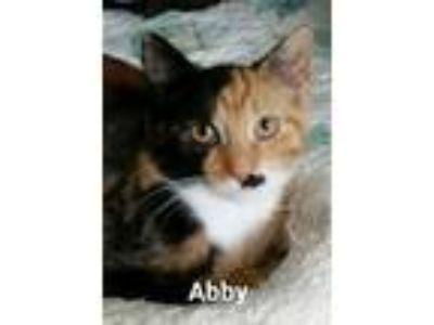 Adopt Abby a Calico or Dilute Calico Calico (short coat) cat in Marlton