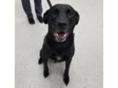 Adopt Ty a Black Shepherd (Unknown Type) dog in Jacksonville, FL (25891020)