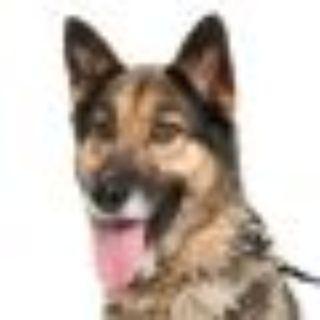 Nicki Minaj German Shepherd Dog Dog