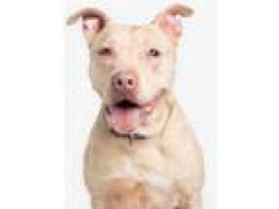 Adopt Apricot a Tan/Yellow/Fawn Mixed Breed (Medium) / Mixed dog in Chamblee