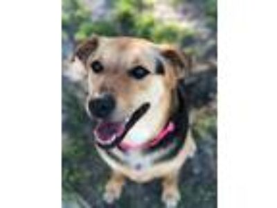 Adopt Mya a Hound, German Shepherd Dog