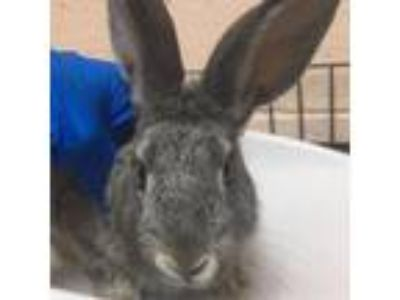 Craigslist Las Cruces Nm >> Craigslist Small Animals For Sale Classifieds In Las Cruces New