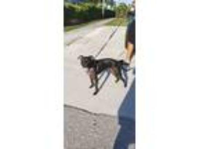 Adopt Luna a Black Terrier (Unknown Type, Medium) dog in Miami Springs