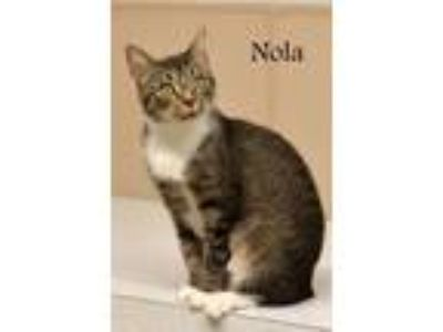 Adopt Nola (and kitten) a Tabby, Domestic Short Hair