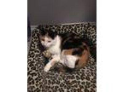 Adopt Naia a Calico or Dilute Calico Calico / Mixed cat in Huntington Beach